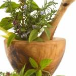 Dix plantes pour drainer votre organisme et retrouver de la vitalité