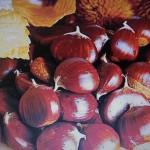 Châtaignes entières ou farine de châtaignes, des recettes d'entrée en automne
